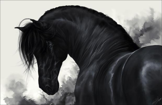 black_horse___by_whitespiritwolf-d37045x