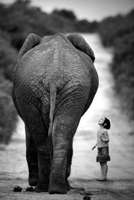 elephantday