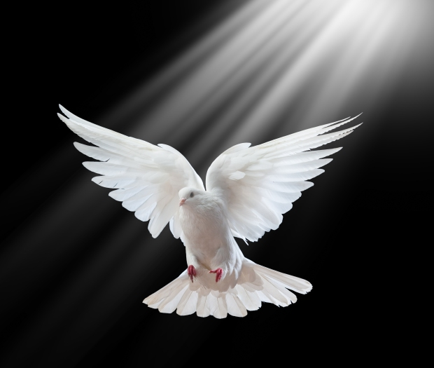 bigstock-a-free-flying-white-dove-isola-127620984