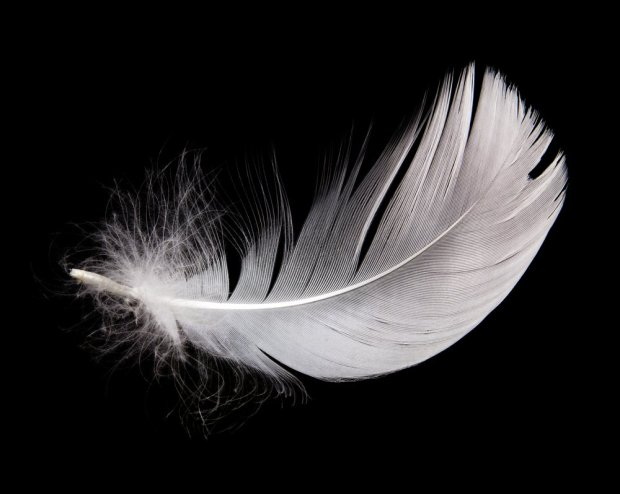 2140137940-feather