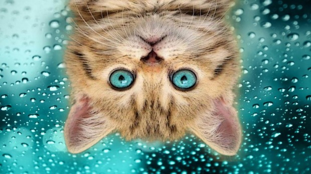 funny_cat_upside-down-hd-humor-wallpaper