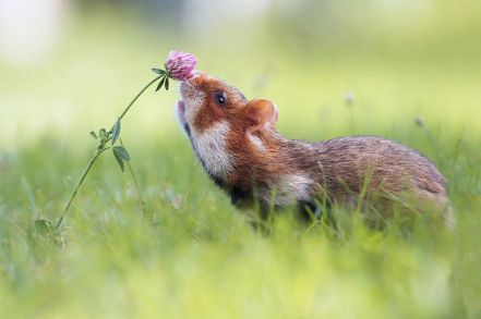 17-adorable-animals-taking-time-to-smell-the-flowers-14