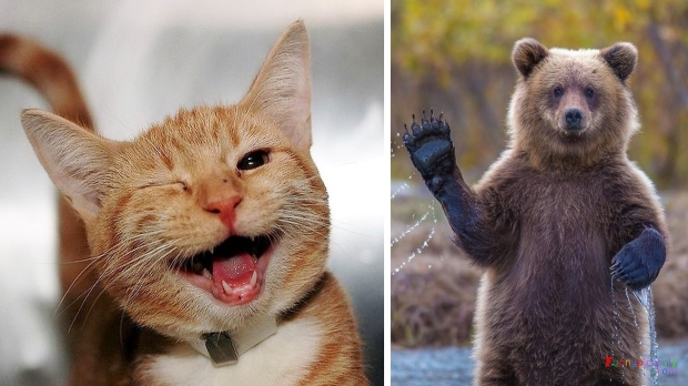 40-most-ridiculously-cute-and-happy-animals