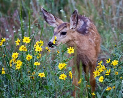 animals-smelling-flowers-331__880