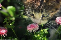 animals-smelling-flowers-39__880
