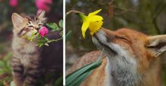 animals-smelling-flowers-fb3__700-png