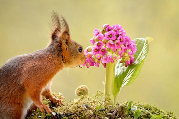 animals-smelling-flowers-pictures-19