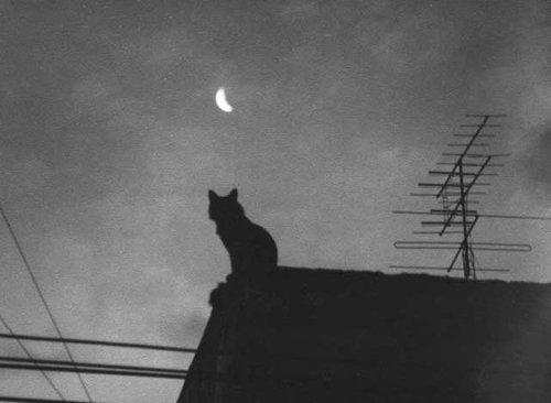black-cat-darkness-house-favim.com-3179413