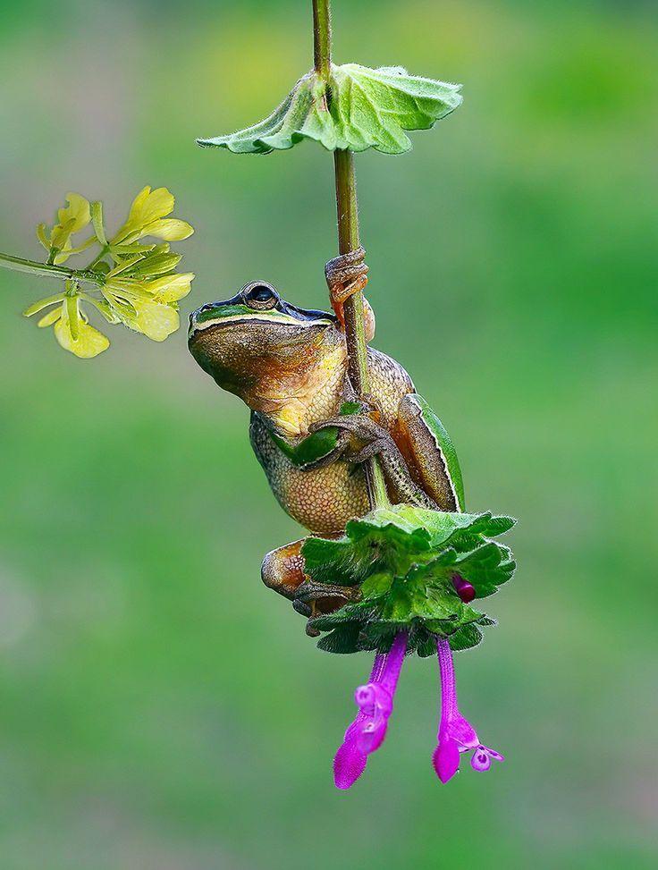 c66e19cea001cc79ef91ddebb3fc7df0-romantic-funny-frogs