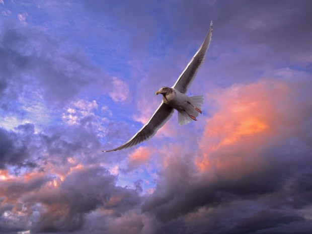 flying-birds-background-hd-wallpapers