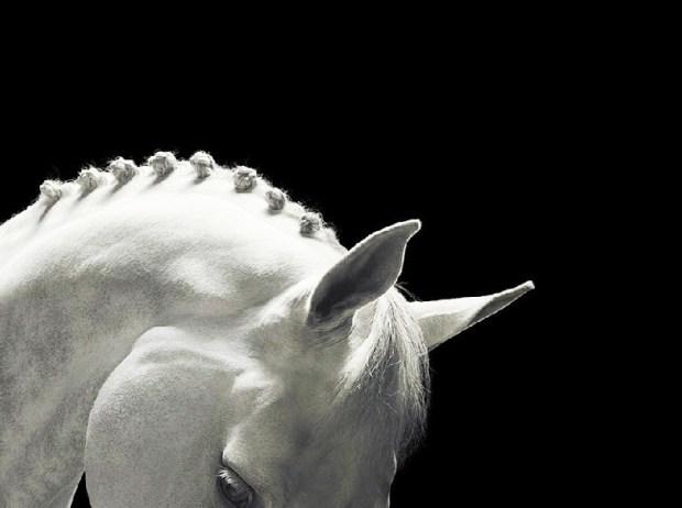 horsebrac3aeddd