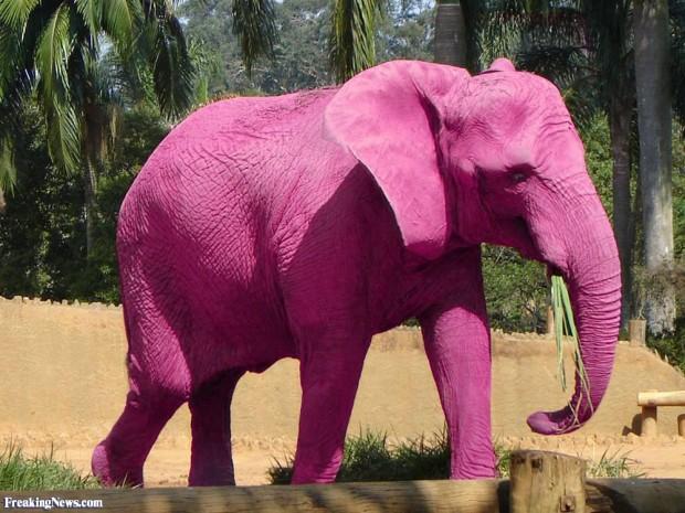 pink-elephant-73315