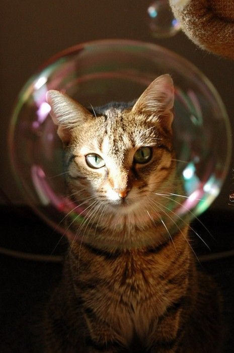 af1073f1a69c8fa4460ba84de555dd11-cat-face-funny-cats
