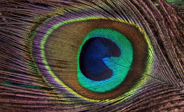 discreet-evil-eye-digital-protection-ward-peacock-feather