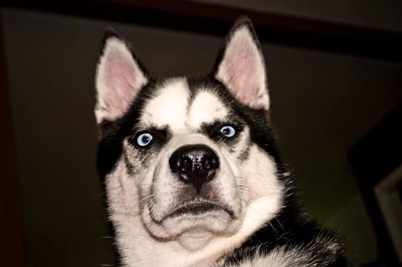 dog-funny-face-weird-3453