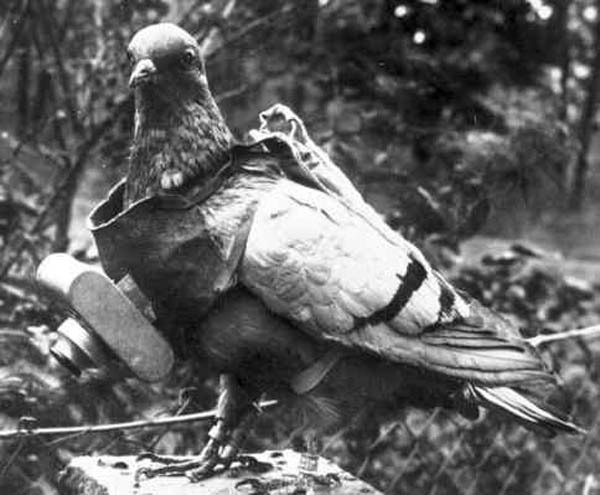 pigeon-camera-aerial-photography