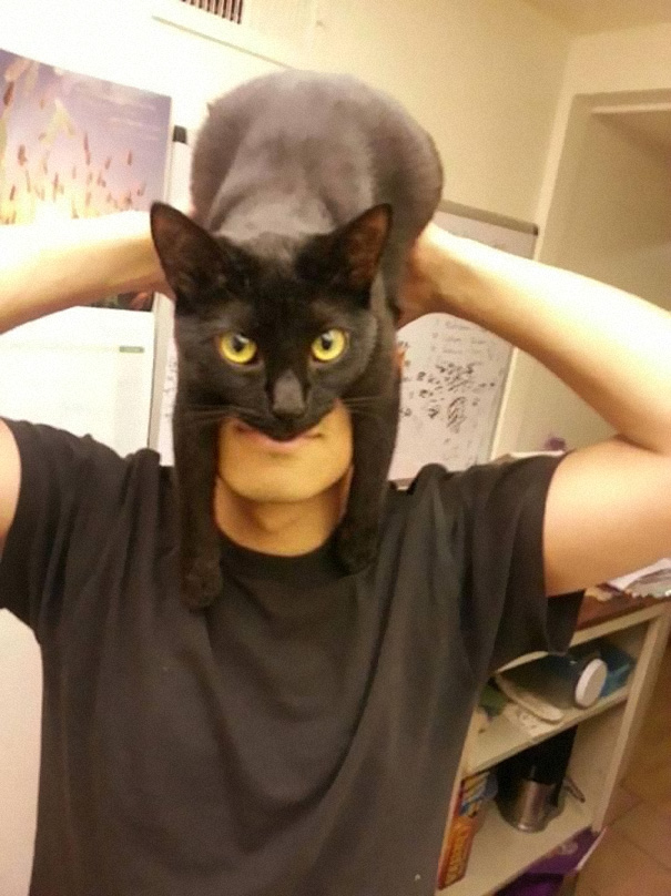 batman-cat-mask-1