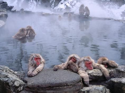 jeff-foott-group-of-japanese-snow-monkeys-relaxes-around-hot-pool_i-g-49-4921-g4u9g00z
