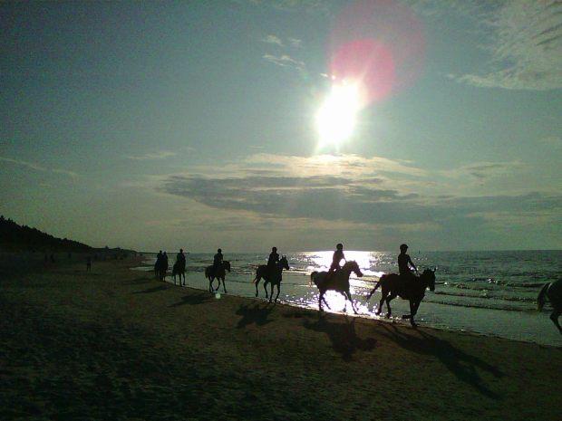 Leba__03.08.19_horses